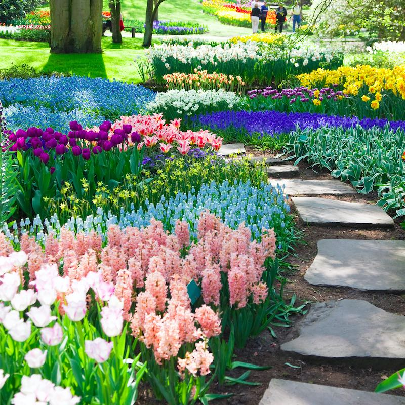 park with tulips in the netherlands