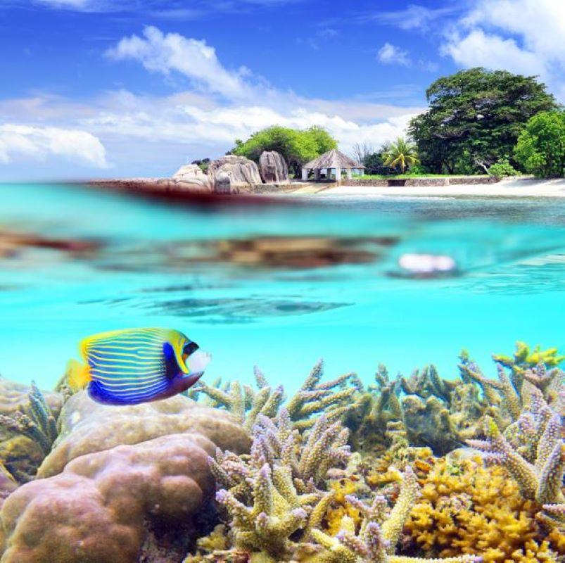 tropical fish sea